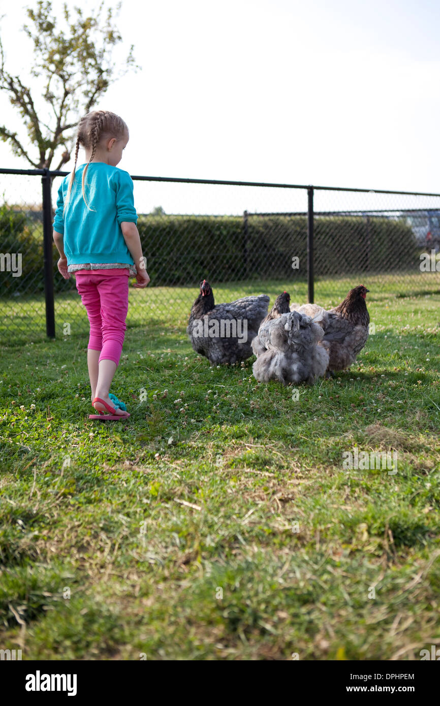 Young girl approaching three hens on a farm. - Stock Image