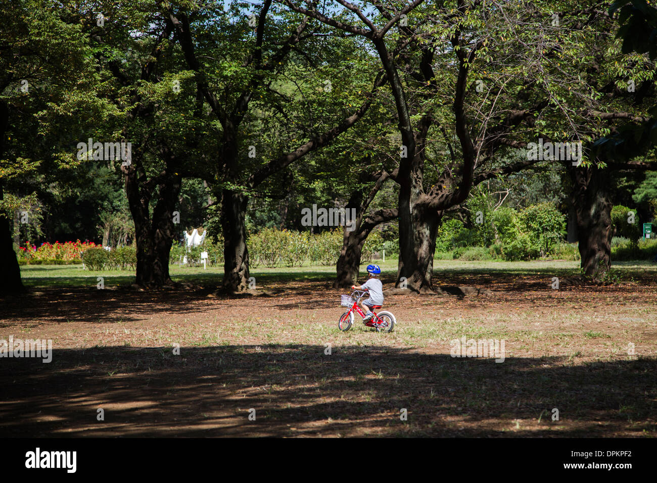 a boy is driving his bicycle in Yoyogi Park. - Stock Image
