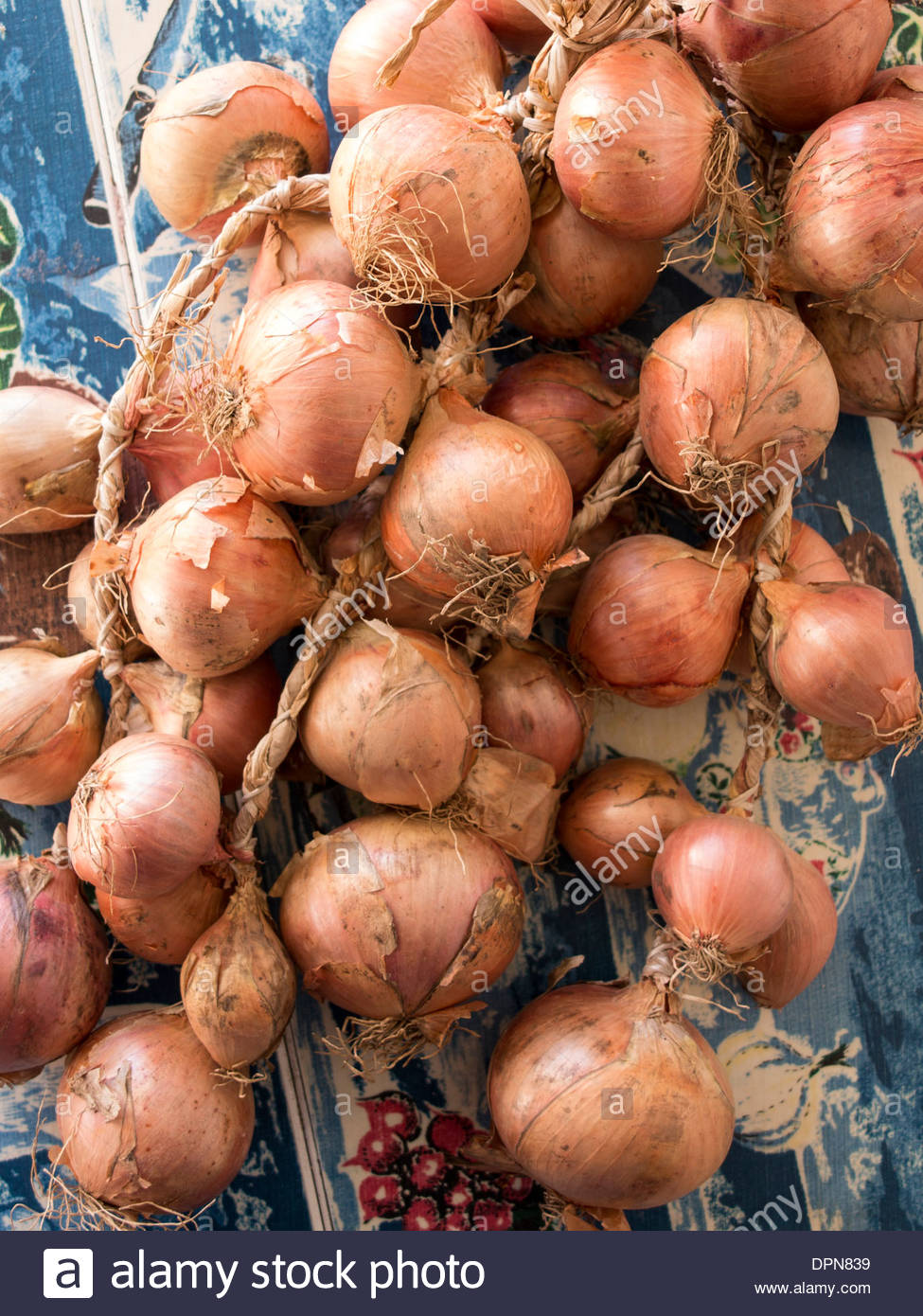 String of onions on kitchen table - Stock Image