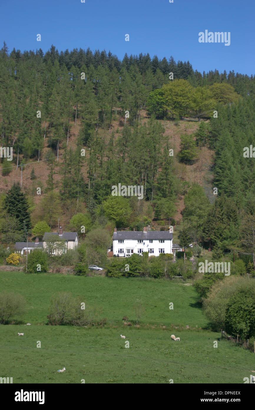 farming and Clwyd Forest Llanferres Denbighshire Wales UK - Stock Image