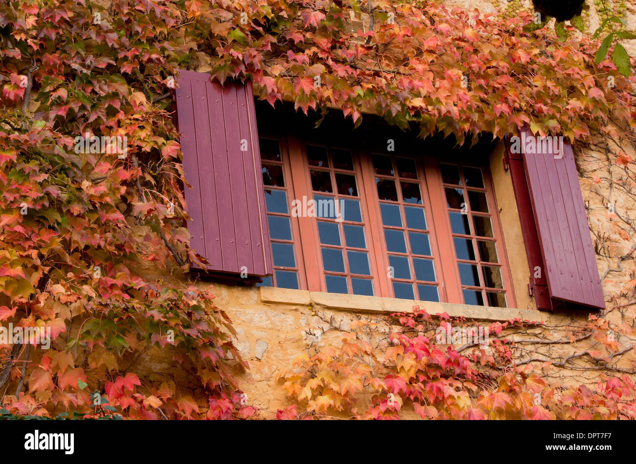 Shuttered windows with Virginia Creeper in autumn, La Roque-Gageac, Dordogne, France - Stock Image