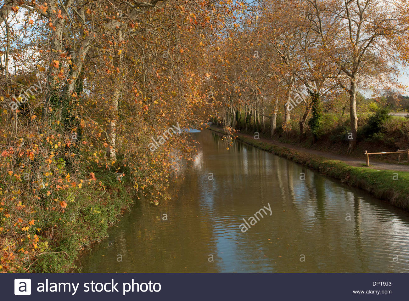 The Canal du midi fringed with plane trees, in autumn, near Carcassonne, south-west, France - Stock Image