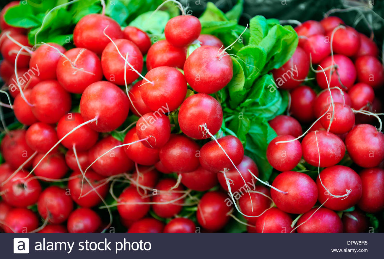 FRESH RADISHES IN A STREET MARKET IN THE UK - Stock Image