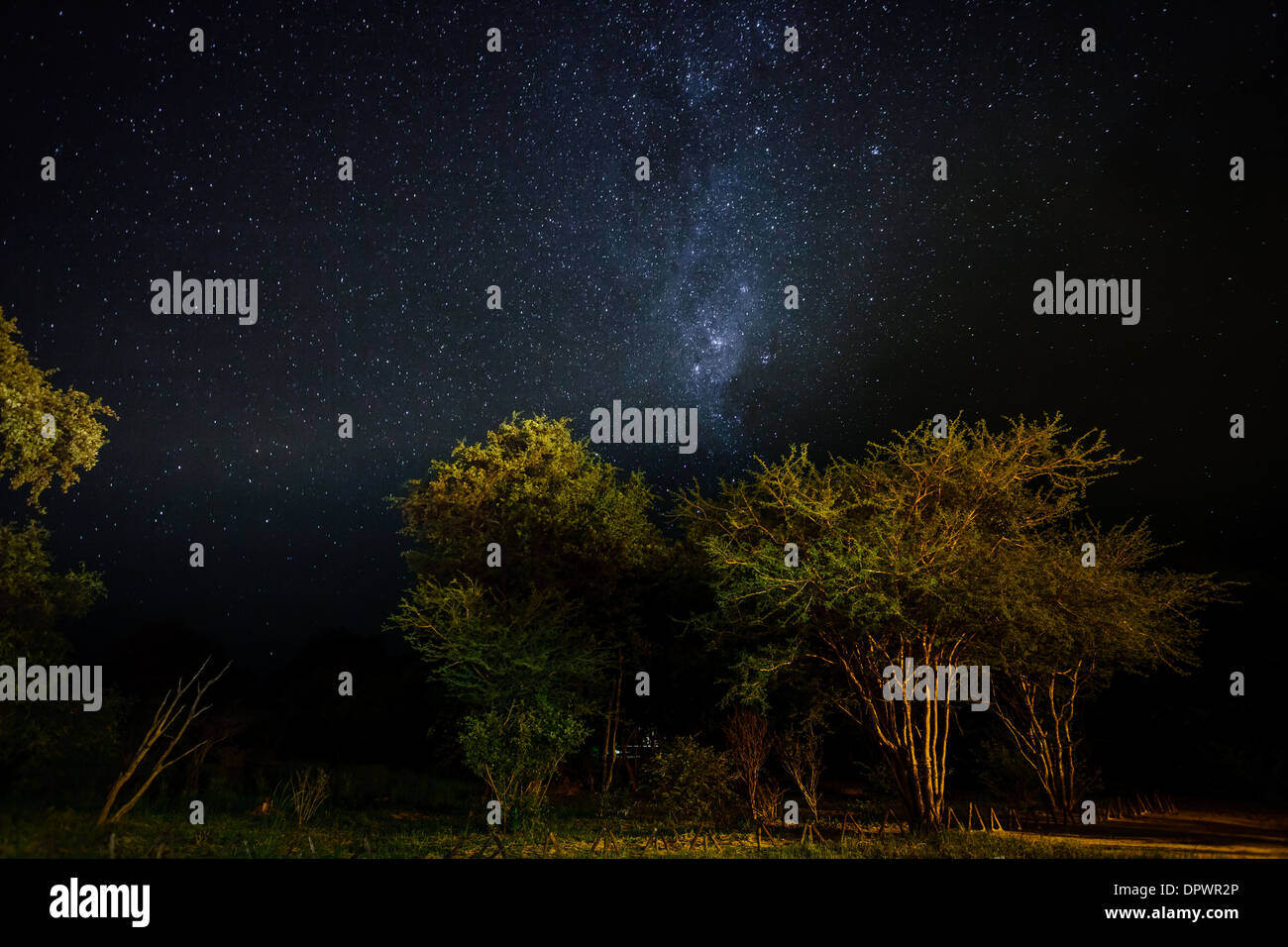 Acacia trees illuminated by the light of safari camp with a sky filled with thousands of bright stars above. - Stock Image