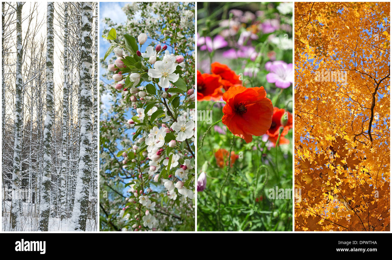 Nature in winter, spring, summer and autumn. Four seasons. - Stock Image