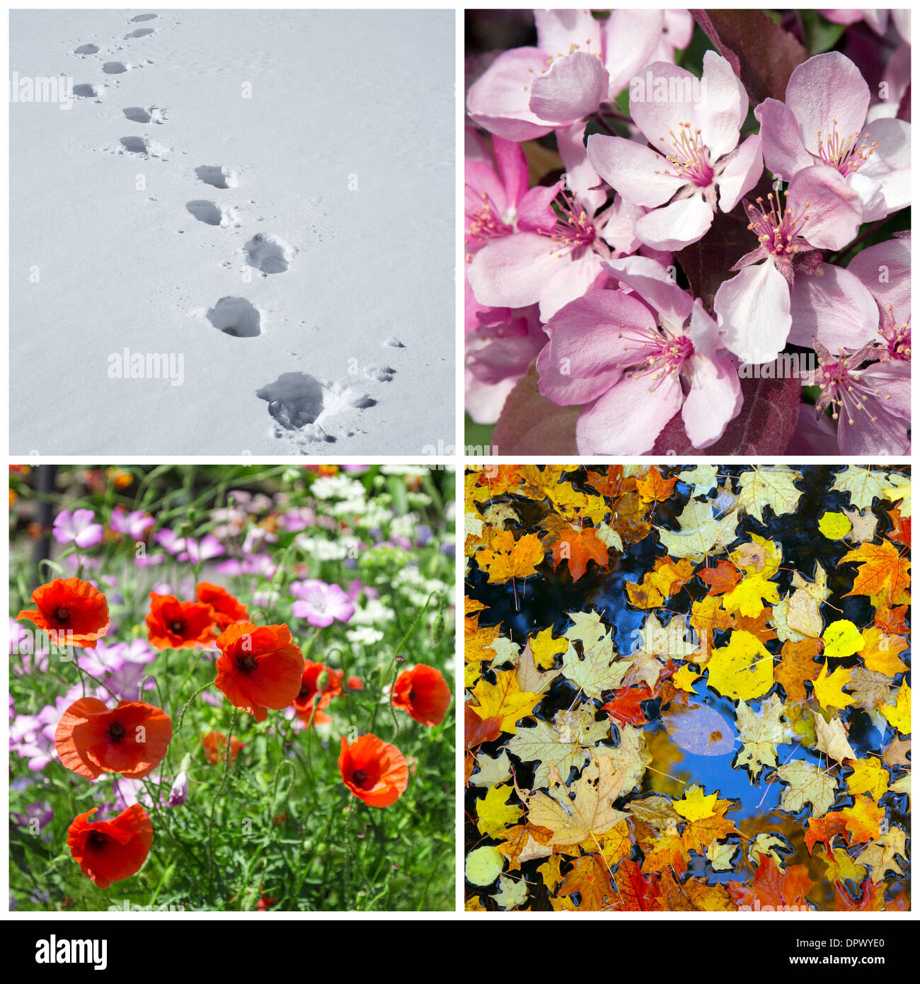 Four seasons. Nature in winter, spring, summer and autumn. - Stock Image