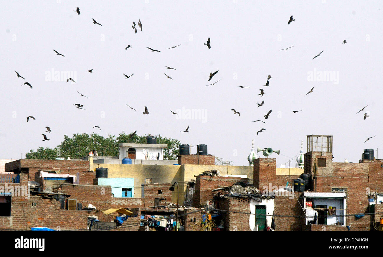 Kites fly over a residential area, part of a garbage dumping ground in the outskirts.  According to a report, Delhi generates 6500 tonnes of garbage per day but only 5000 tonnes reach the sanitary land fills (garbage dumping sites). The Municipal Corporation of Delhi (MCD) engaged in devising various schemes for disposal, treatment and transportation of solid waste but is lagging b - Stock Image