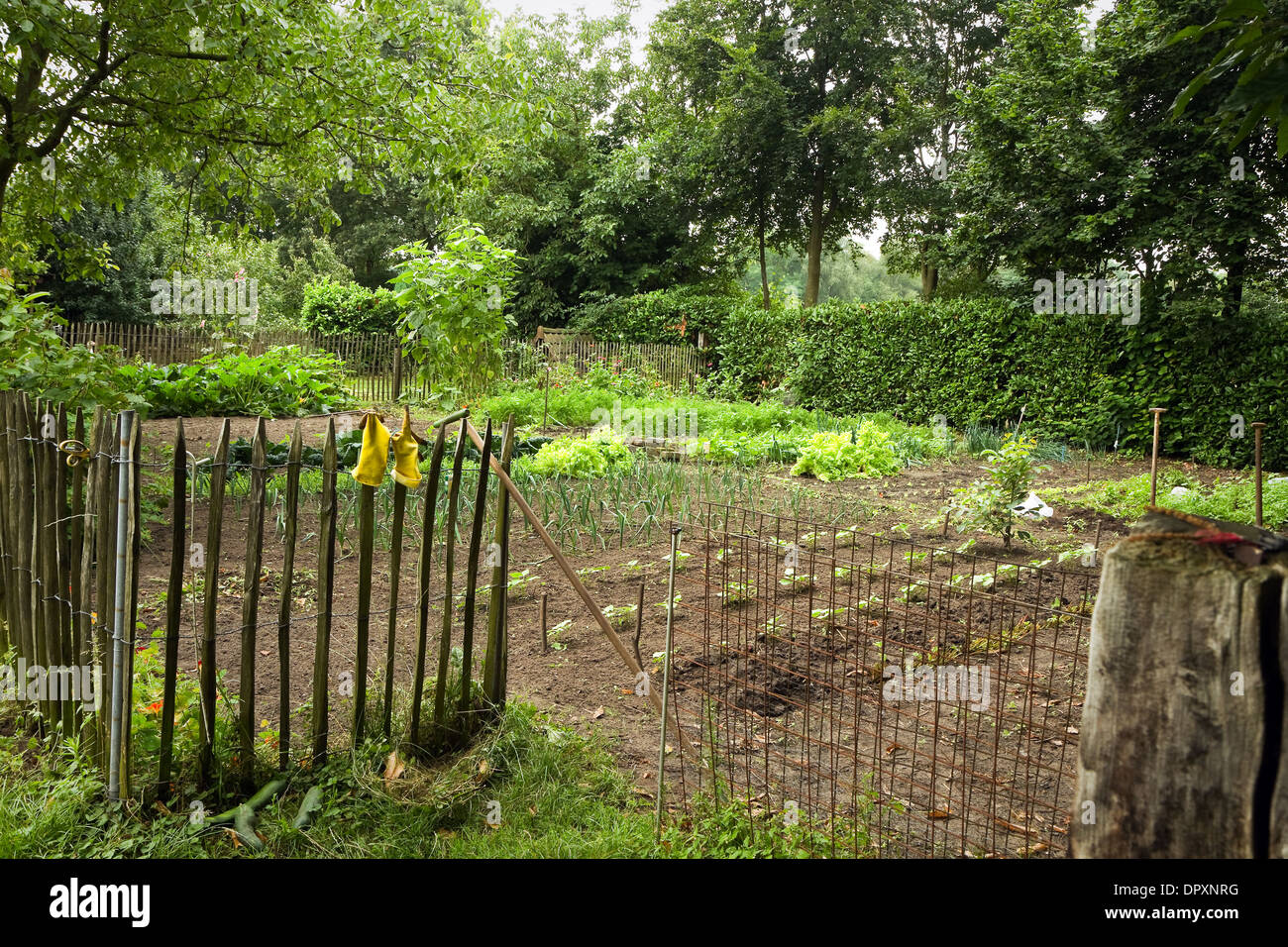 Vegetable garden with fence next to a farm in the country in summer - Stock Image
