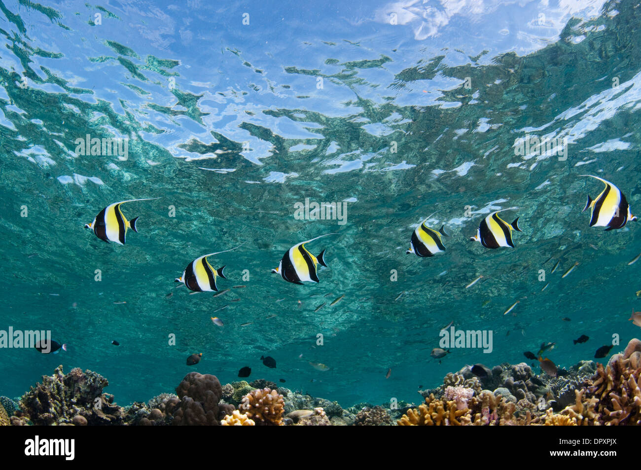 Morish Stock Photos & Morish Stock Images - Alamy
