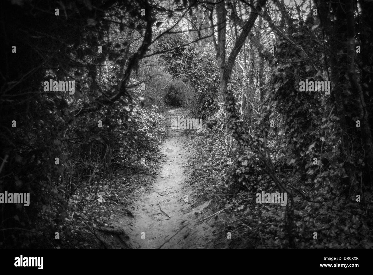 Photograph of walkway surrounded by trees  down at Bradlaugh Fields Northampton, Northamptonshire - Stock Image