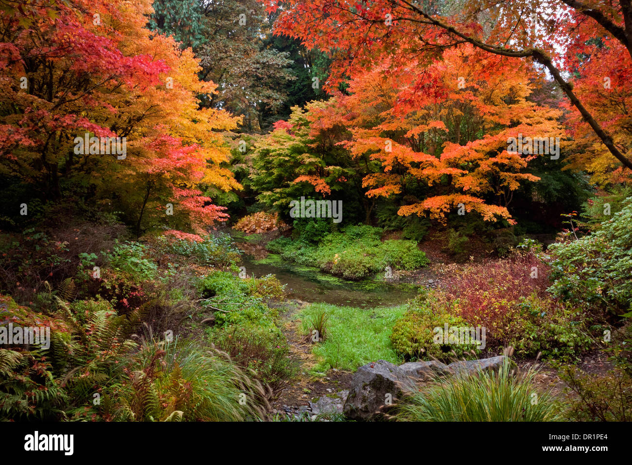 WASHINGTON - Fall color in the Yao Garden section of the Bellevue ...