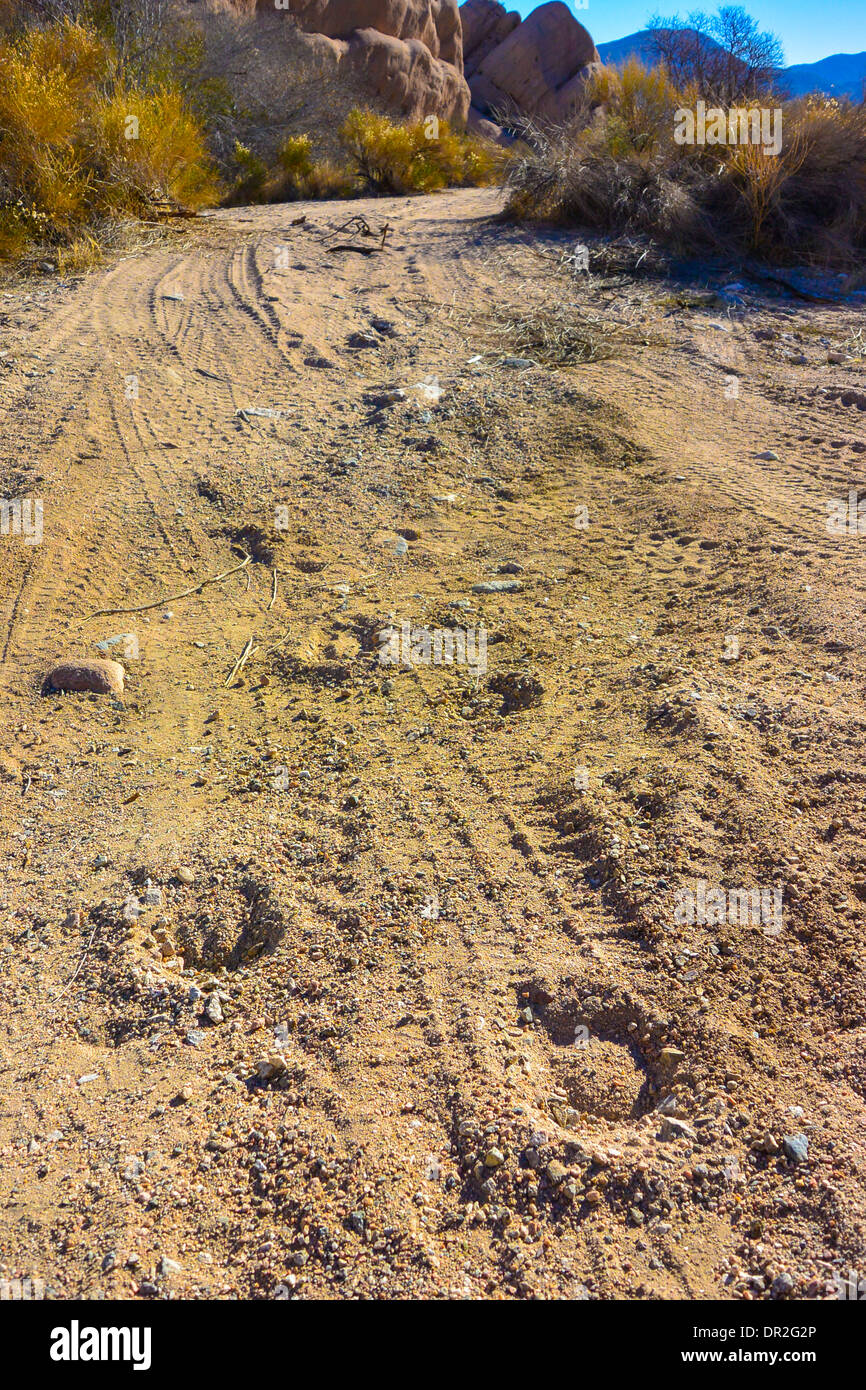 Hoofprints on a desert road, Mojave desert California Stock Photo