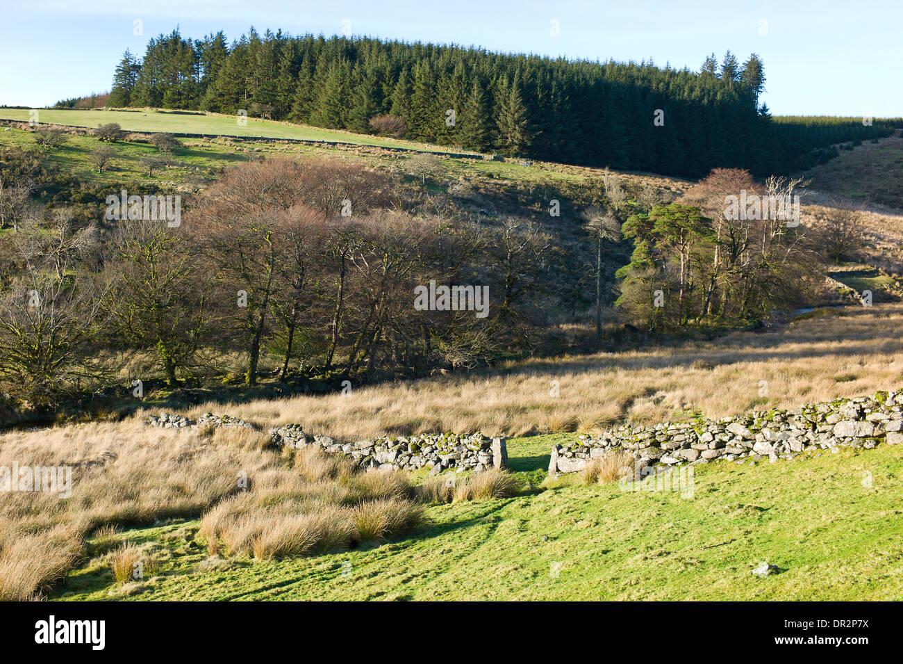 West Dart river valley and Beardown Hill near Two Bridges, Dartmoor, Devon, England - Stock Image