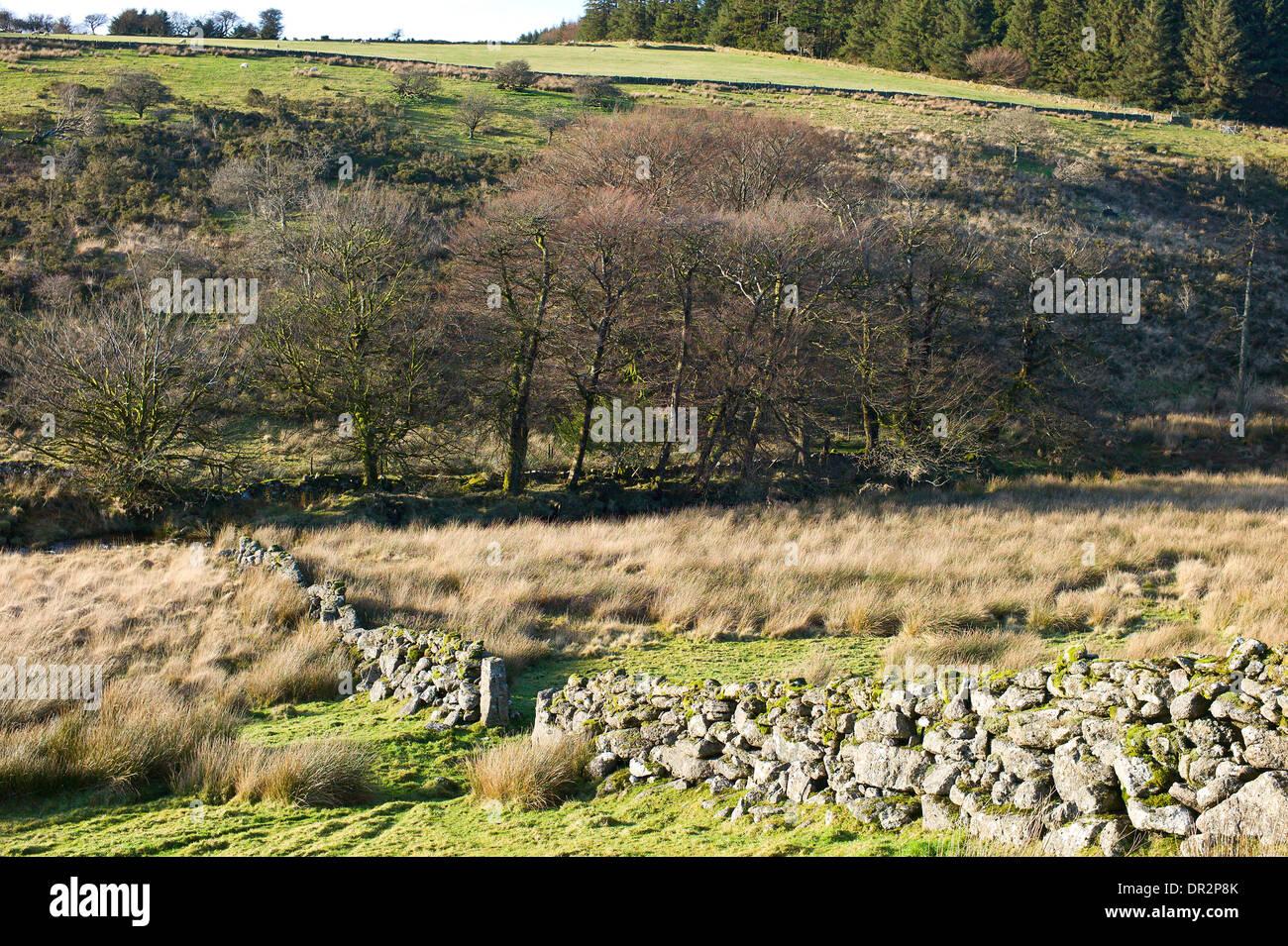 West Dart river valley and Beardown Hill near Two Bridges, Dartmoor, Devon - Stock Image