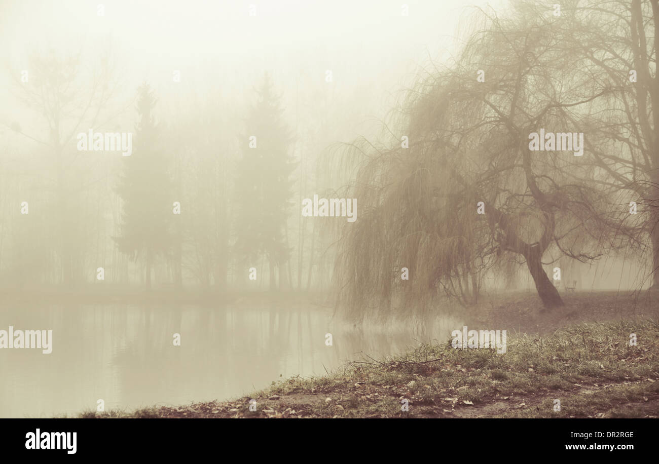 Foggy morning in peaceful area - Stock Image