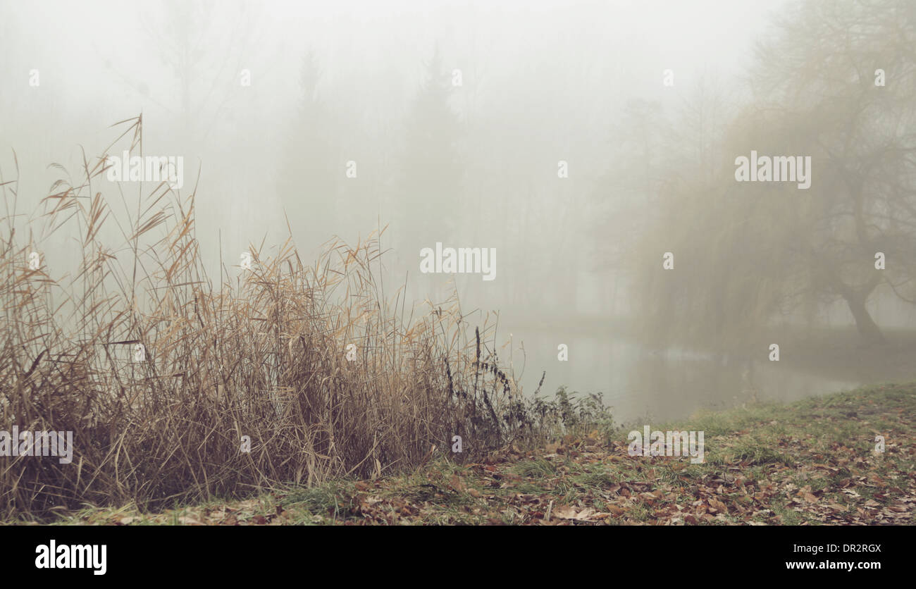 Foggy morning over the small still lake - Stock Image