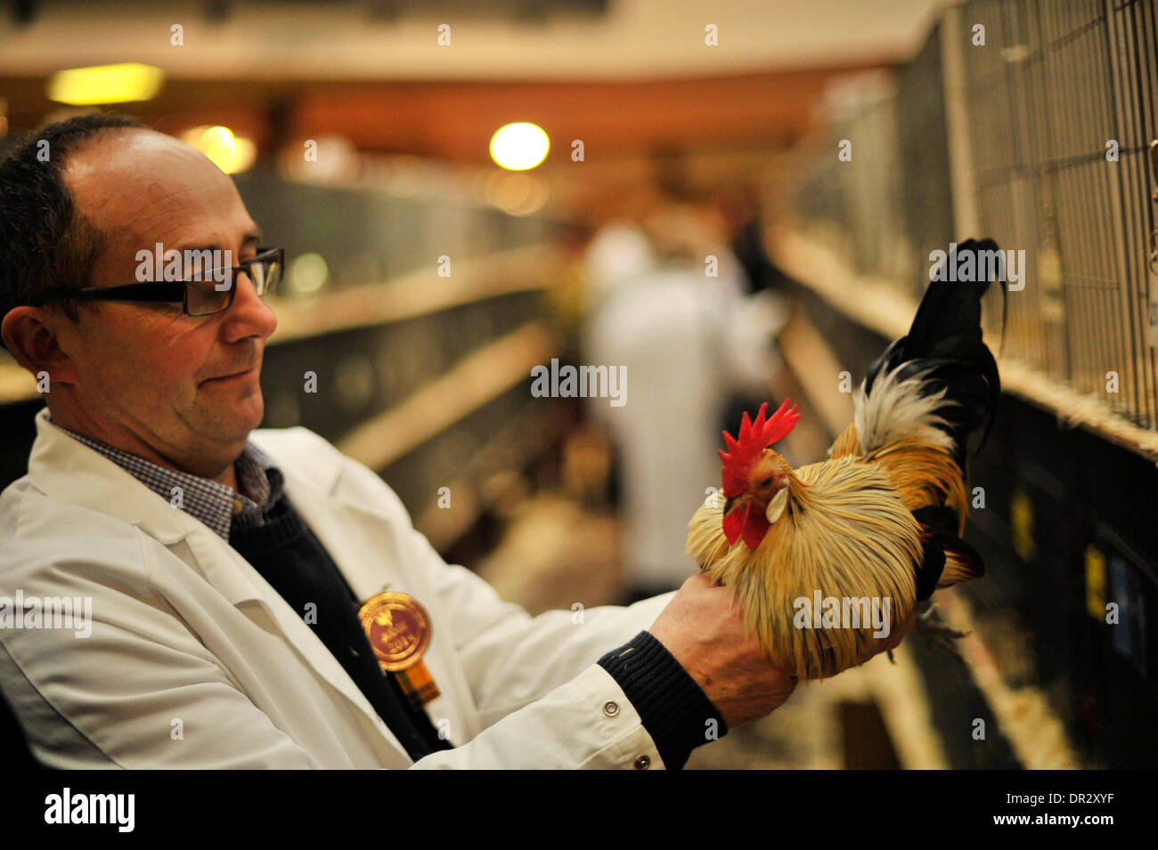 Lanark, UK. 18th January 2013, Judging takes place at the 40th Scottish National Poultry Show which is sponsored by Fancy Fowl Magazine at Lanark Agricultural Centre. Credit Steven Scott Taylor / Alamy Live News - Stock Image