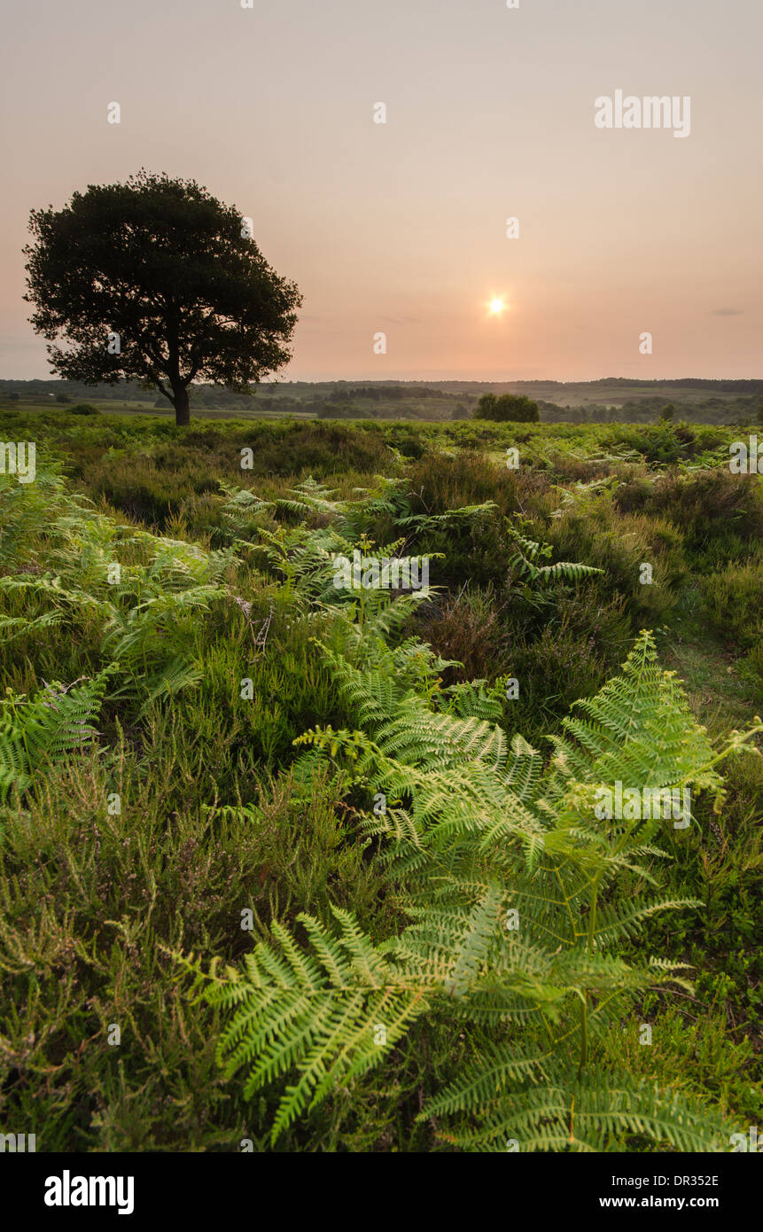 The New Forest National park during a stunning sunrise. - Stock Image