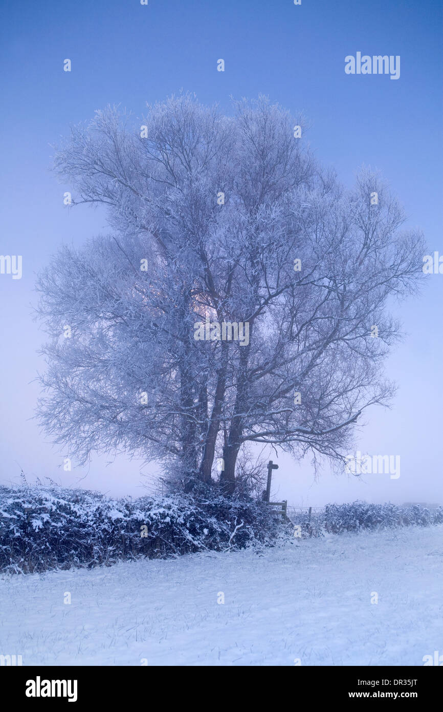 The sun sets behind a snow covered tree along a public footpath on the edge of a field near Defford, Worcestershire. Stock Photo