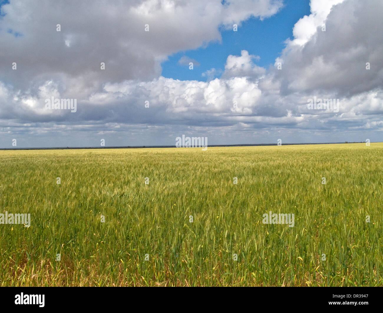 Wheatfield, Western Australia - Stock Image