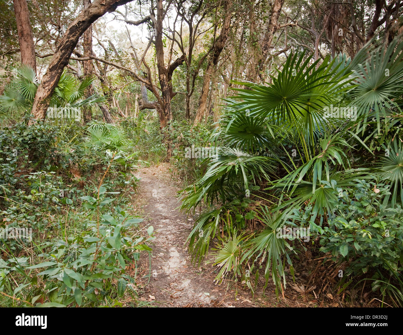 Narrow walking trail through coastal forest landscape with palm trees at Hat Head National Park NSW Australia - Stock Image