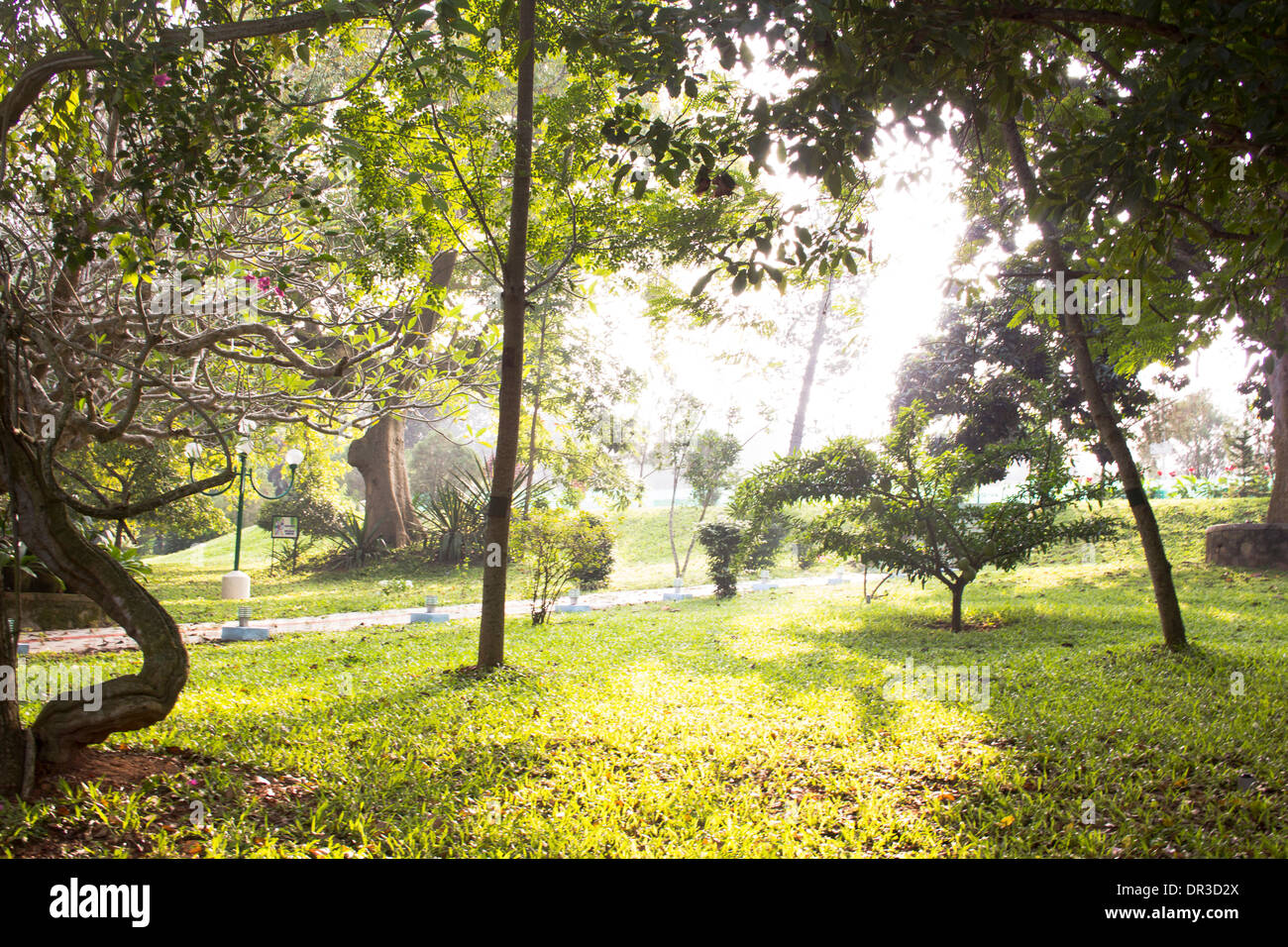 Scenic view of green gardens in the mist of a good morning - Stock Image