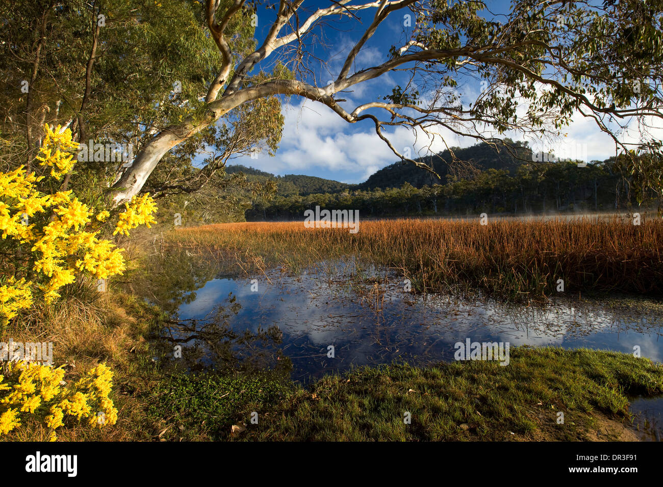 Spectacular landscape with blue lake and wetlands edged with wildflowers at Dunn's Swamp  Wollemi National Park NSW Australia - Stock Image