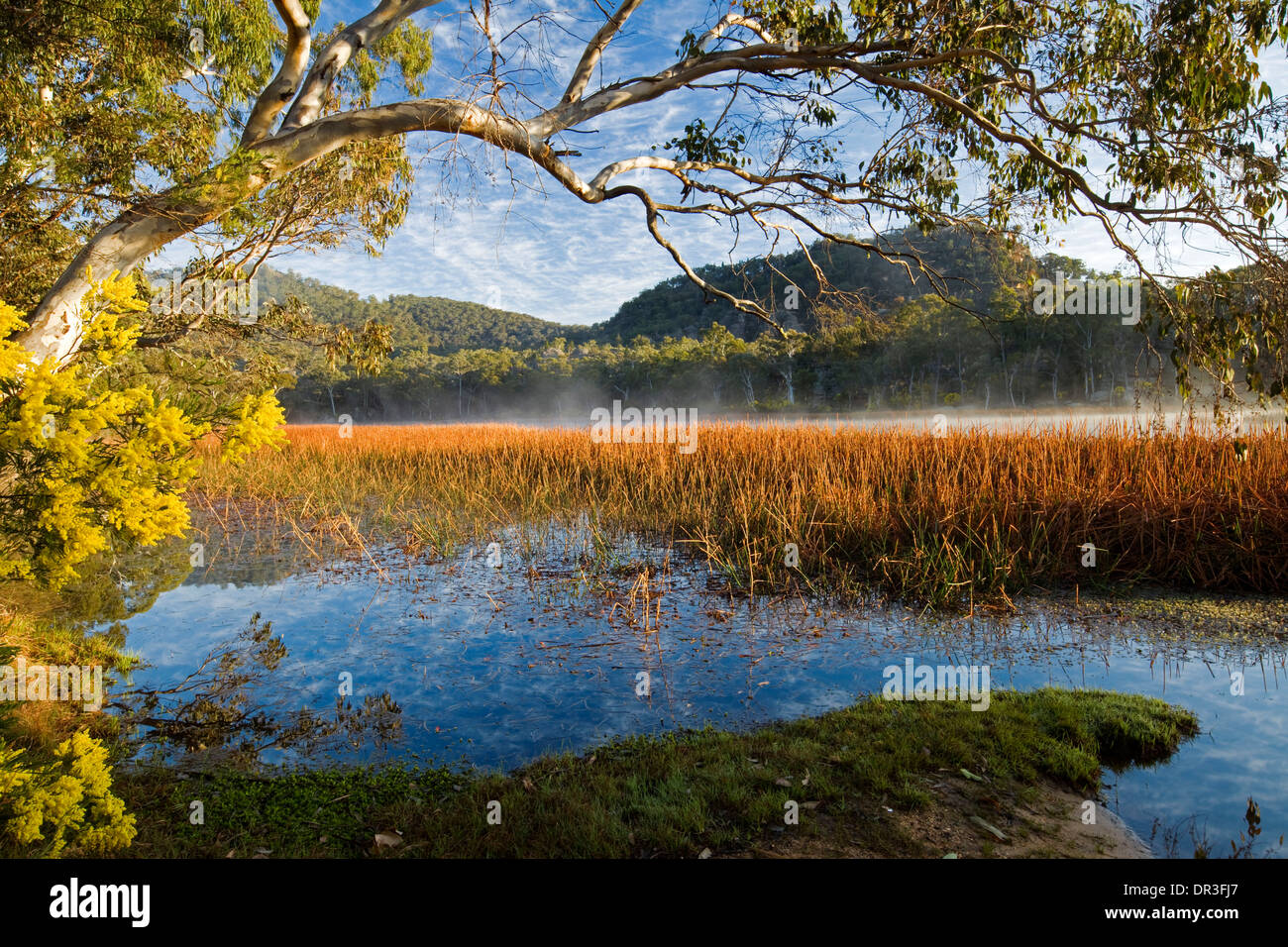 Spectacular landscape, mist over blue lake, wetlands edged with wildflowers at Dunn's Swamp  Wollemi National Park NSW Australia - Stock Image