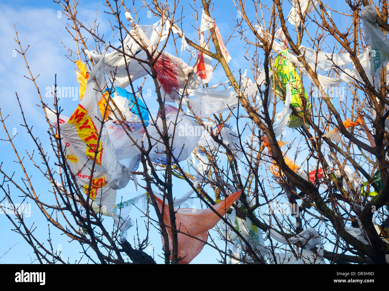 "Southport, Merseyside, UK. 19th January, 2014.  UK Weather. Swirling winds and blustery conditions around the Tesco recycling bays at Kew, deposit, adorn and festoon nearby trees with a myriad of varied plastic bags that have escaped caught seemingly forever in the unreachable tree branches, littering the landscape with the detritus of our inconsiderate waste.   In some countries people ironically refer to plastic bags caught in fences and trees as the ""national flower', whereas in the UK they are known as ""witches' britches"". - Stock Image"