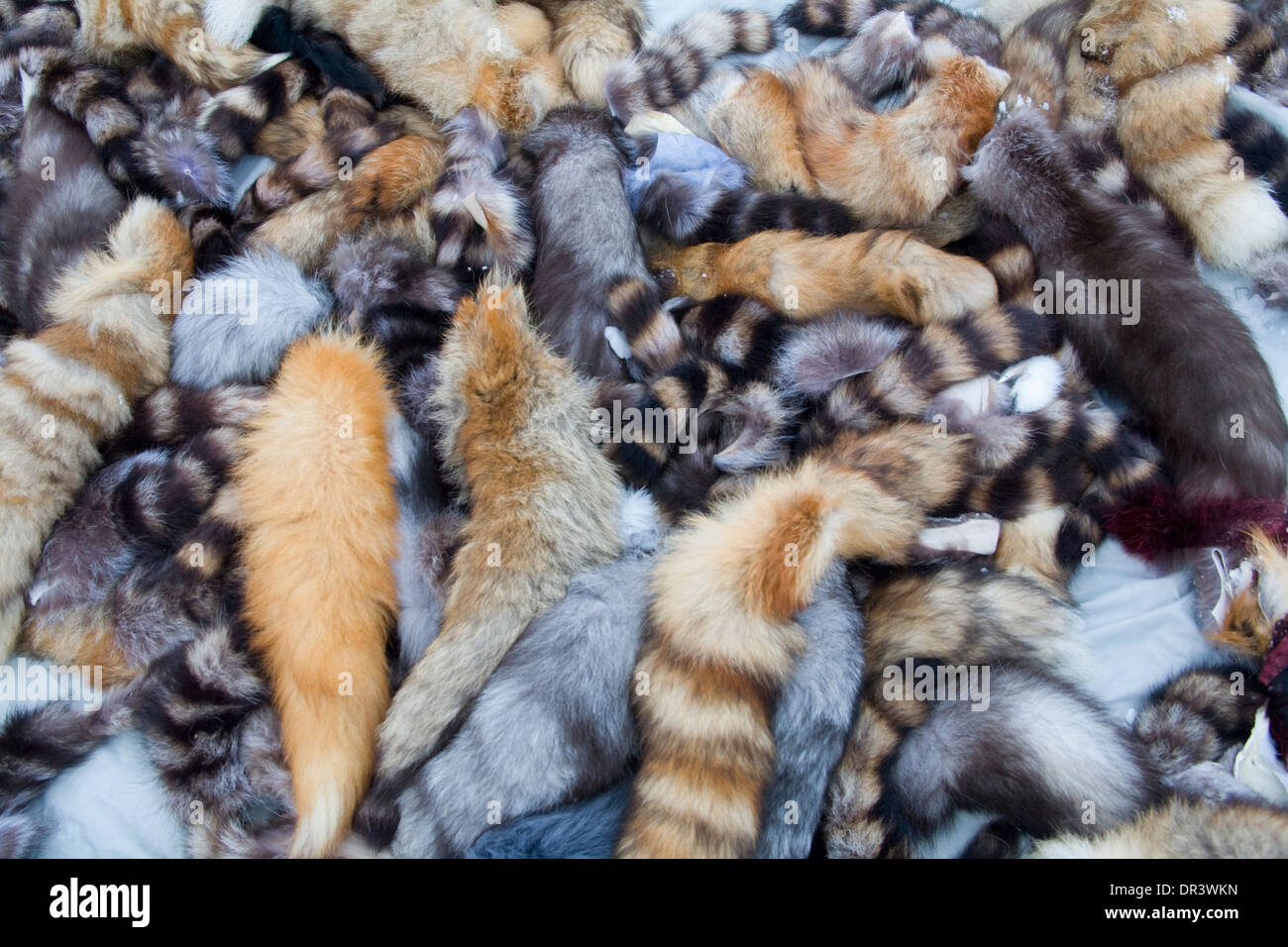 Animal Skin Hide Pelt Jokkmokk fair Laponia Sweden Winter - Stock Image