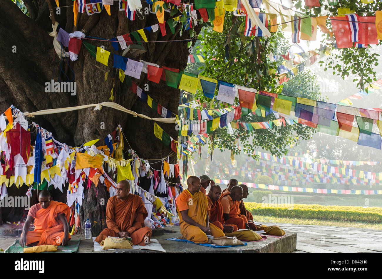 Monks sitting in front of the Bodhi Tree Stock Photo
