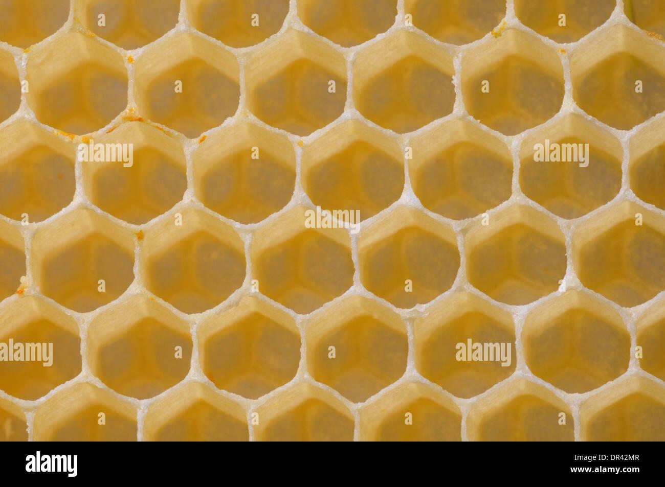 Wax honeycomb hexagonal cells, made by honeybees, Apis mellifera to store honey - Stock Image