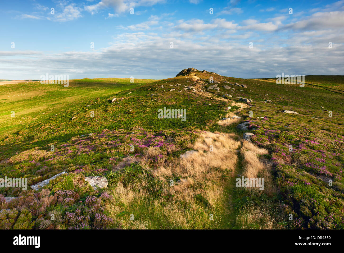 View overlooking West Penwith Moorland. A mix of Heather, Gorse and grasses growing amongst the granite outcrops. - Stock Image