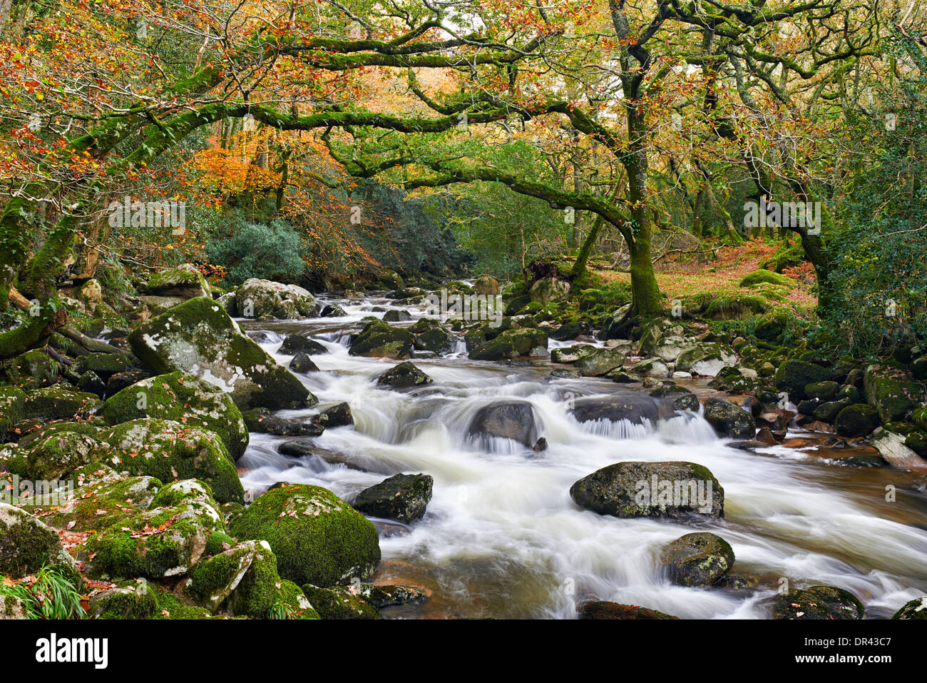 River Plym flowing through Dewerstone wood at Shaugh Prior, Dartmoor National Park - Stock Image