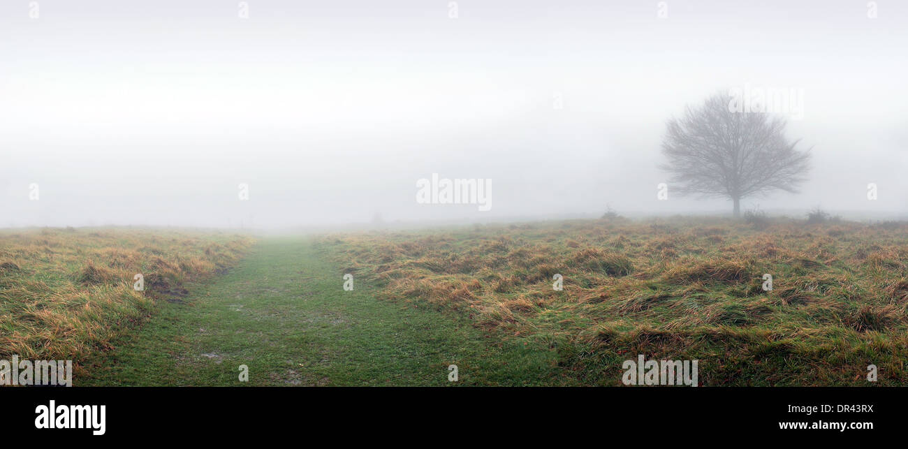 panorama of lonely tree with fog and trail - Stock Image