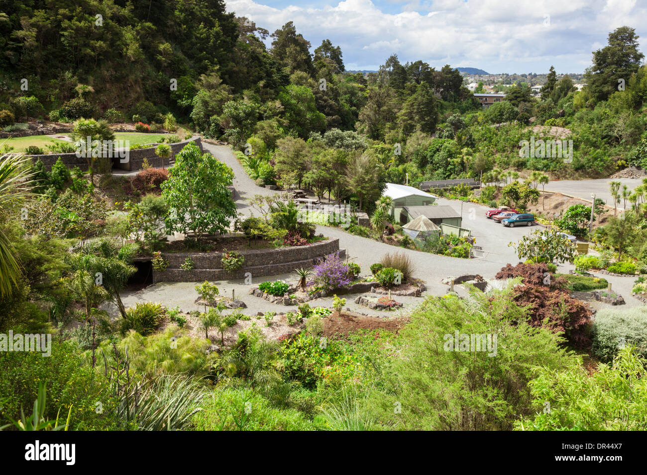 Whangarei Quarry Gardens, Northland, New Zealand. - Stock Image