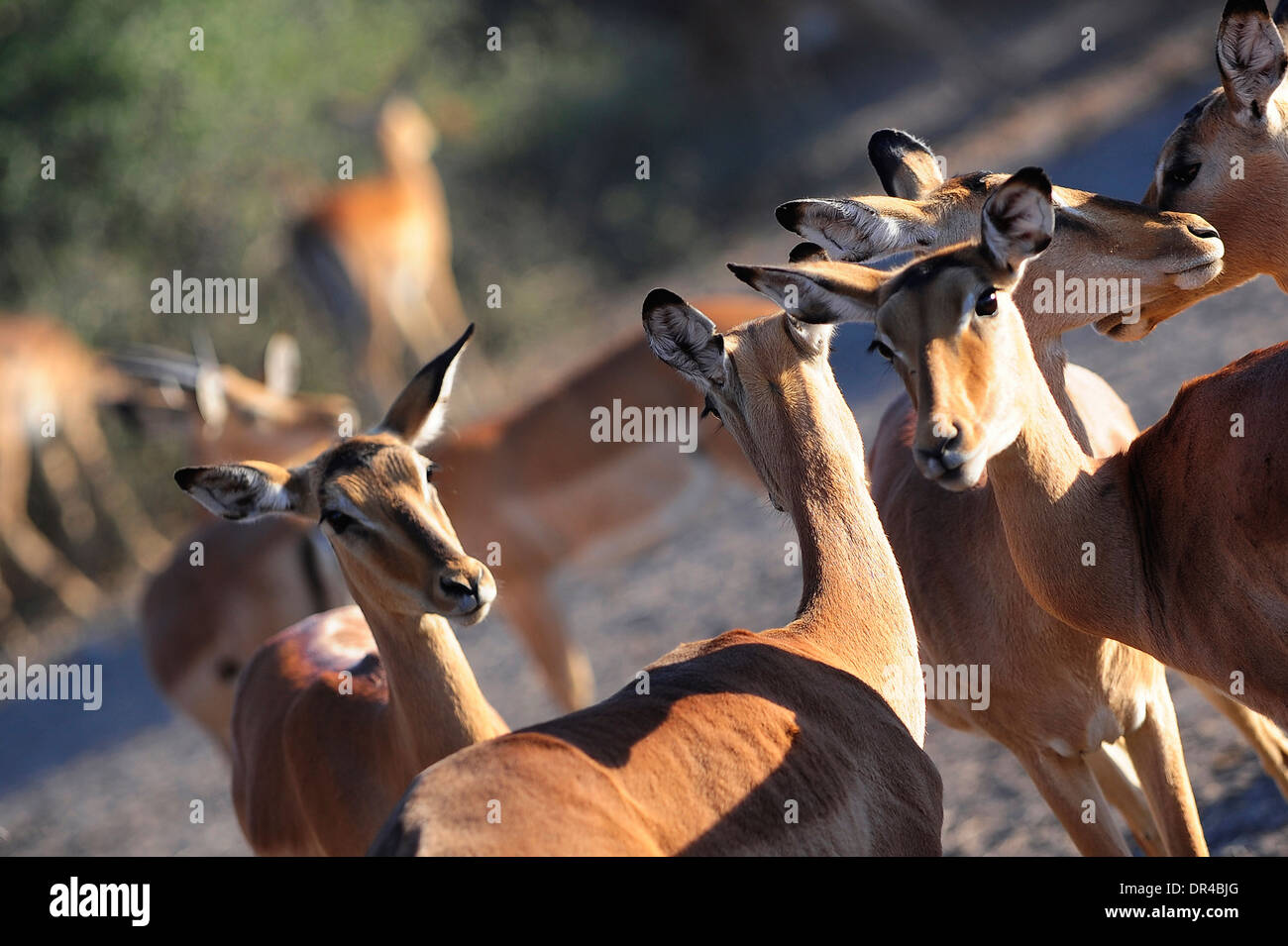 Wild animals at Lake Manyara National Park - Stock Image
