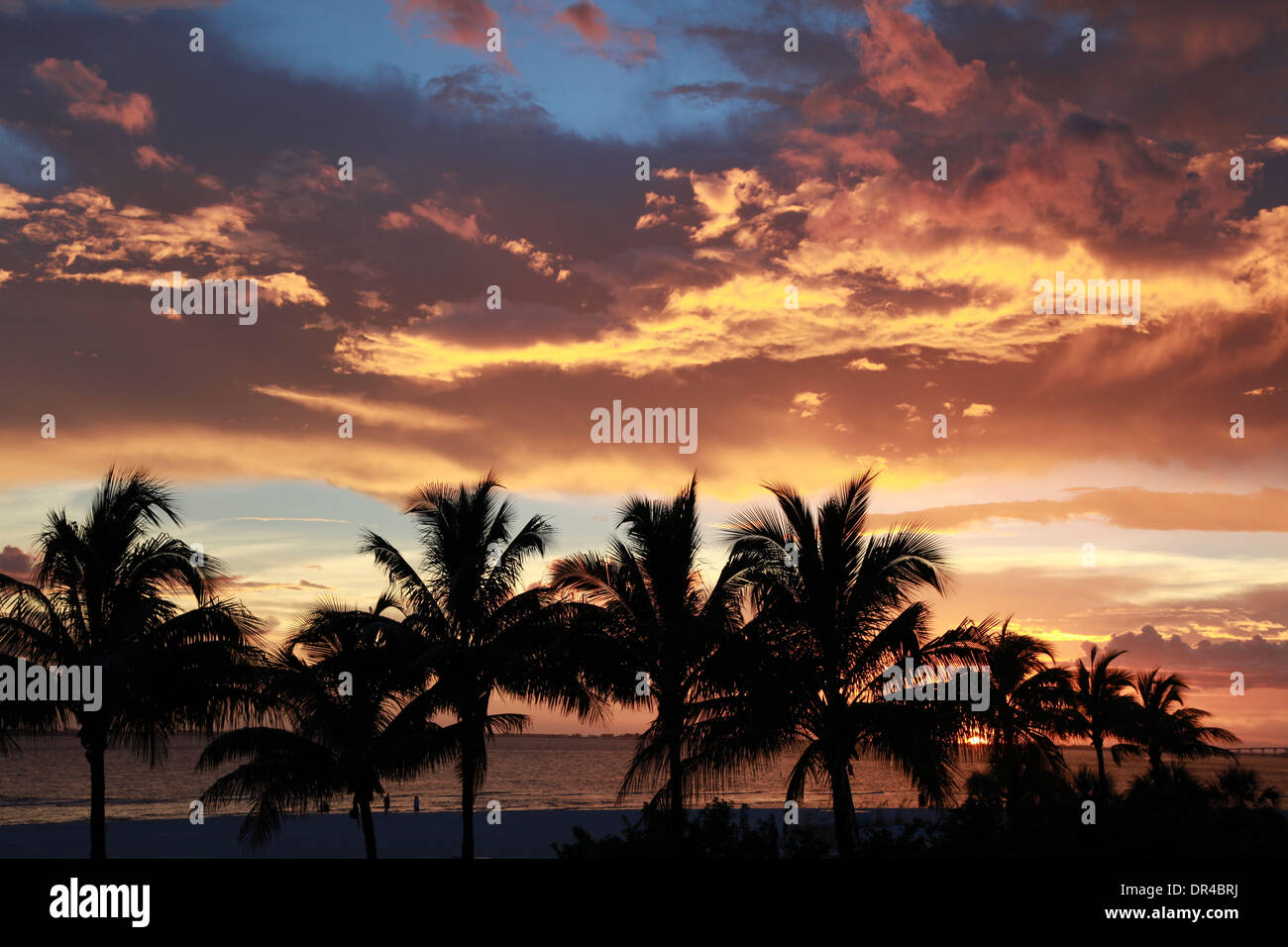Fort Meyers, Florida, USA. 09th Aug, 2013. Silhouette of palm trees on Fort Meyers Beach at sunset. Located along Stock Photo