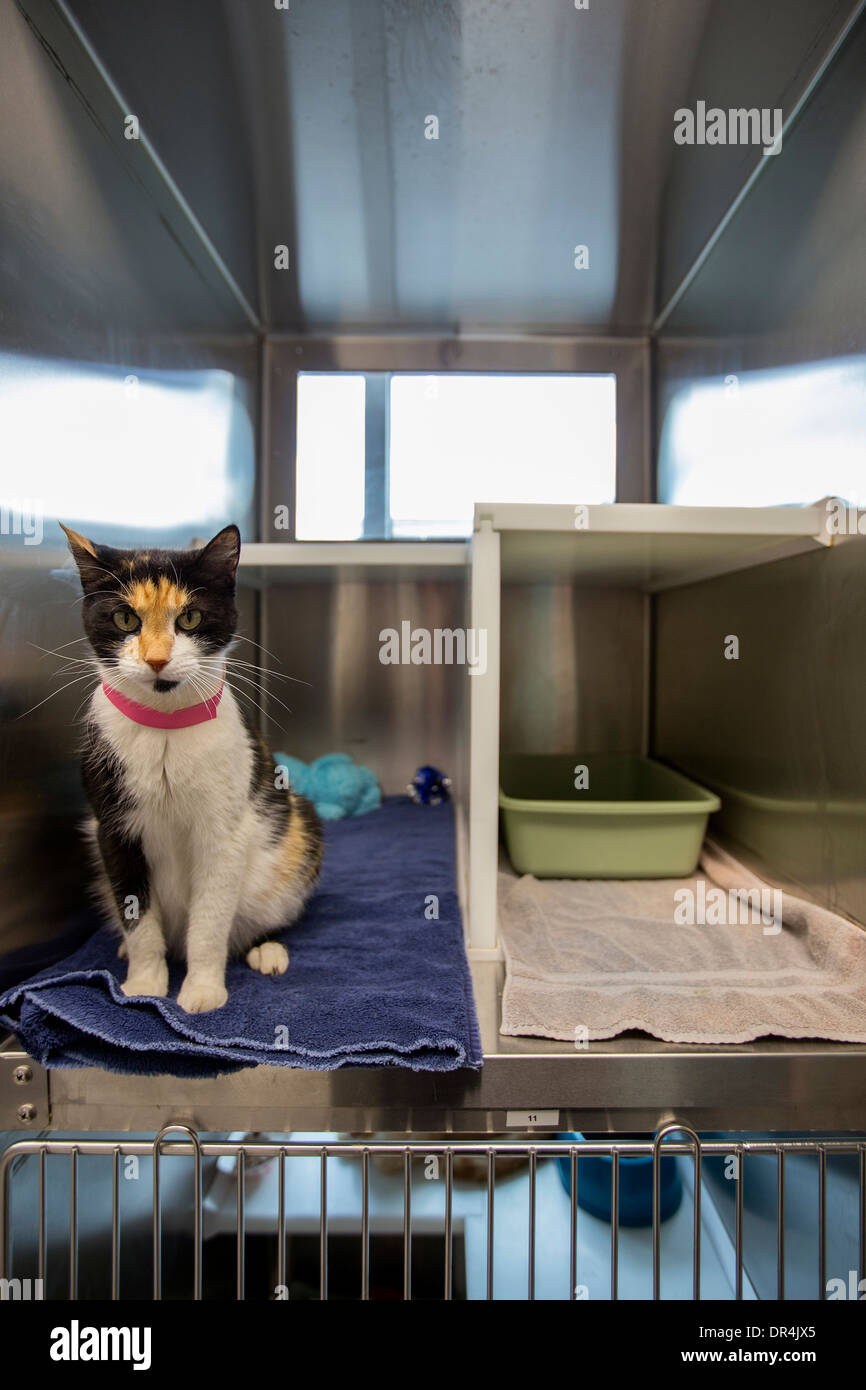 Cat sitting in cage at humane society - Stock Image