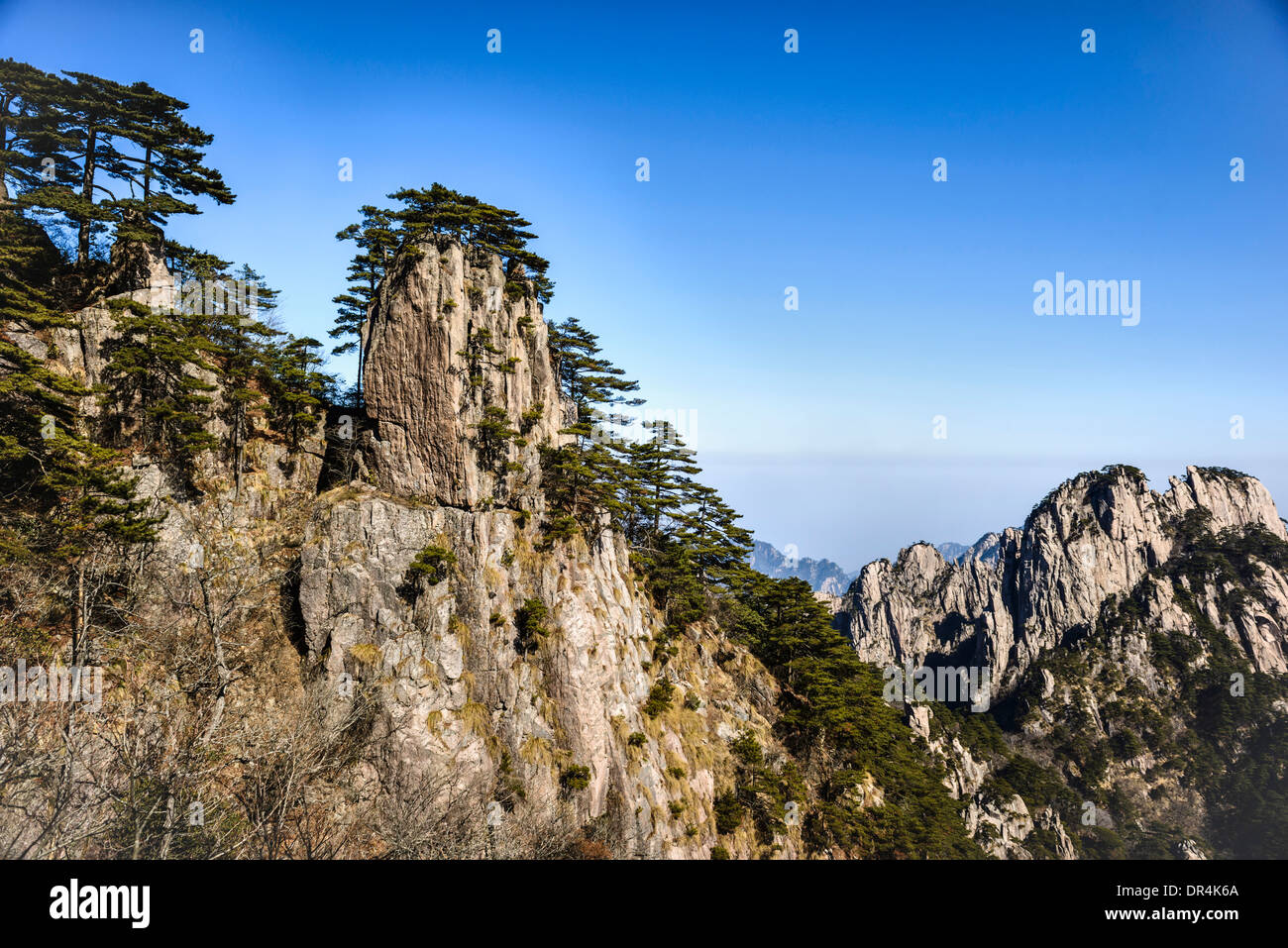 Trees growing on rocky mountains, Huangshan, Anhui, China - Stock Image