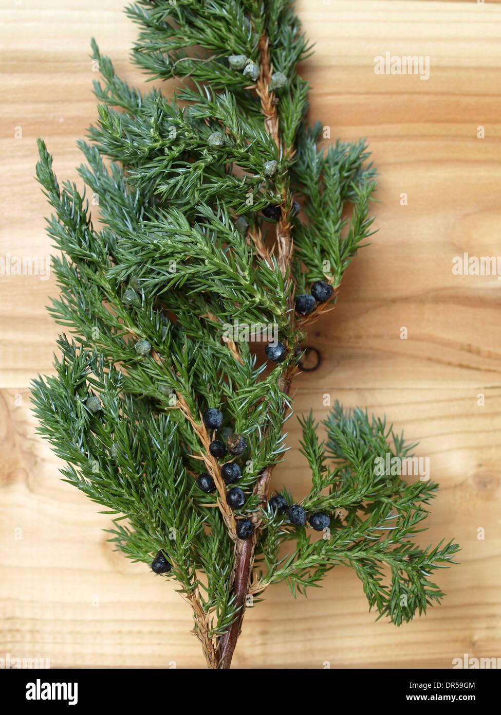 Juniper branch on a board / Juniperus / Wacholderzweig auf Brett - Stock Image