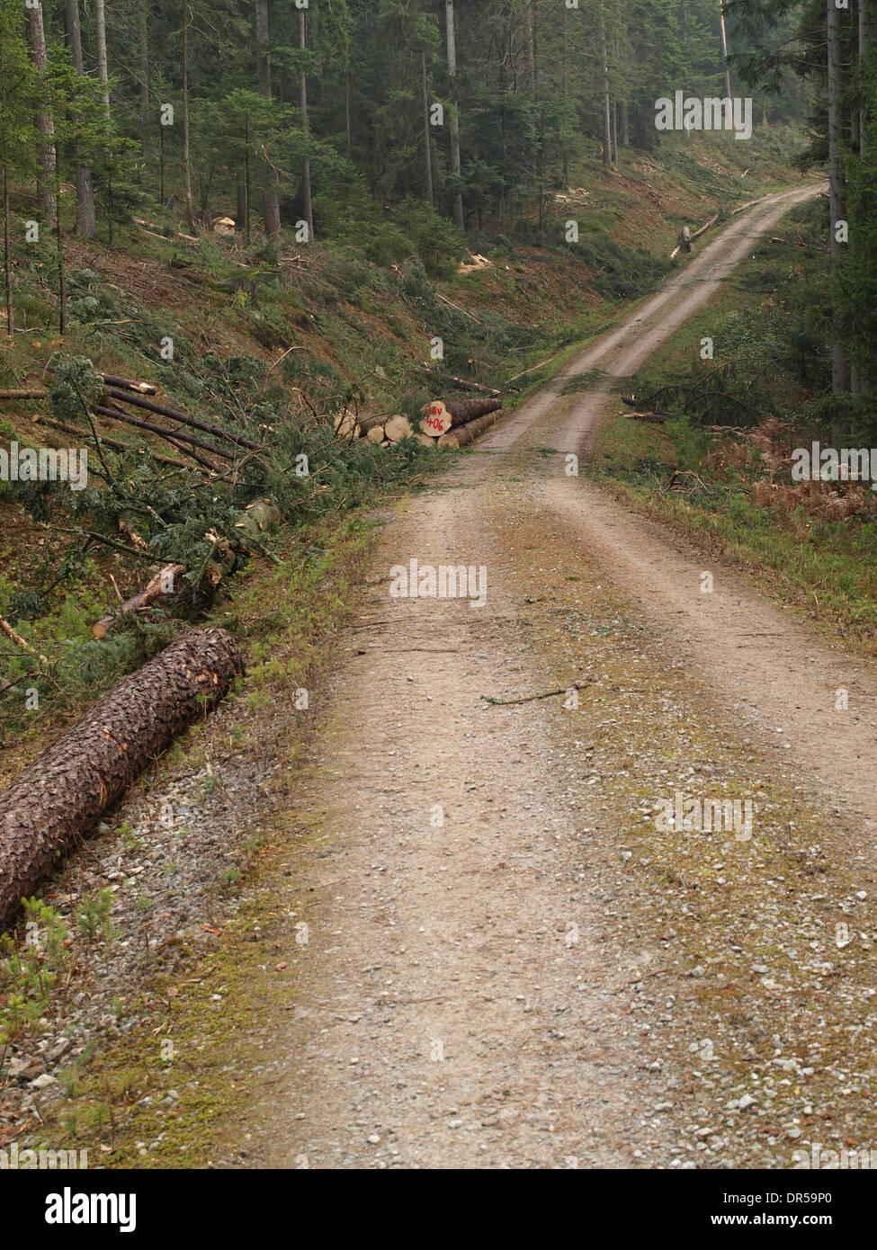 forestry / Forstwirtschaft Stock Photo