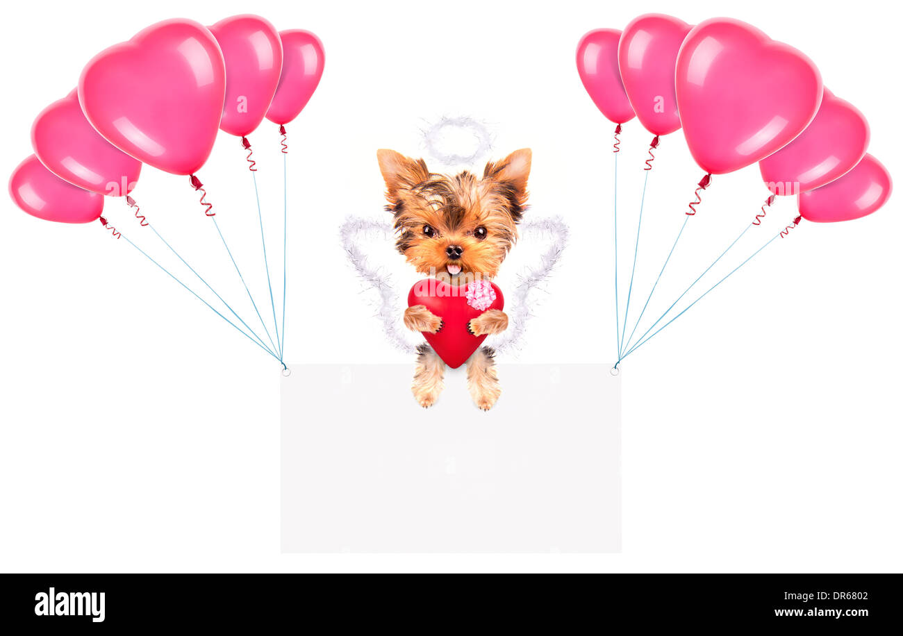 Holiday banner with balloons and valentine puppy dog holding red heart Stock Photo
