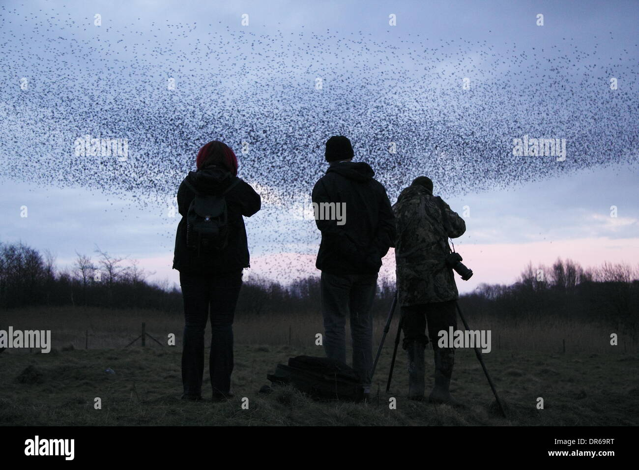 Birdwatchers photograph a murmuration of starlings on Middleton Moor in the Peak District National Park, Derbyshire. UK - Stock Image