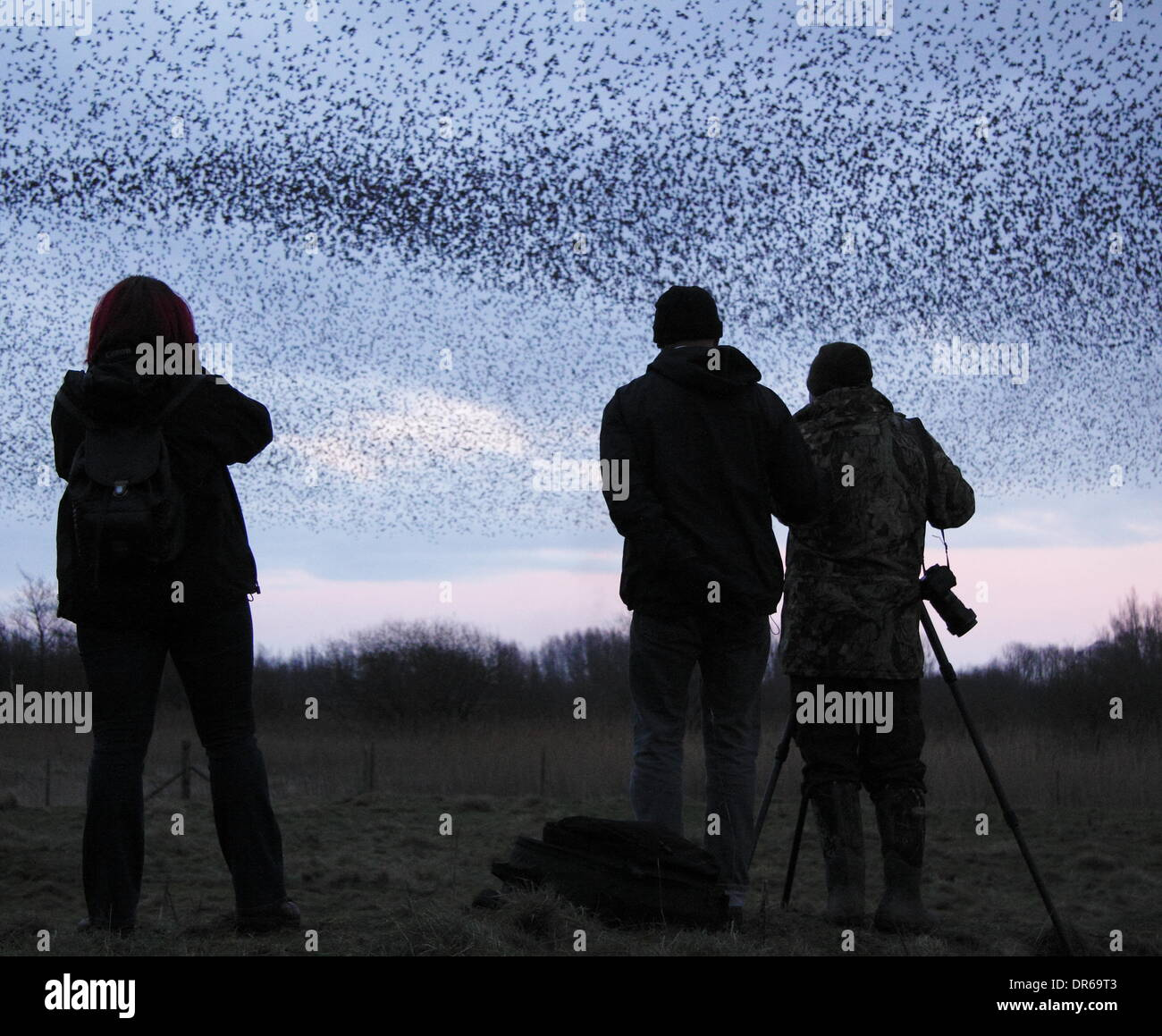 Birdwatchers photograph a murmuration of starlings in the Peak District National Park, Derbyshire. UK - Stock Image