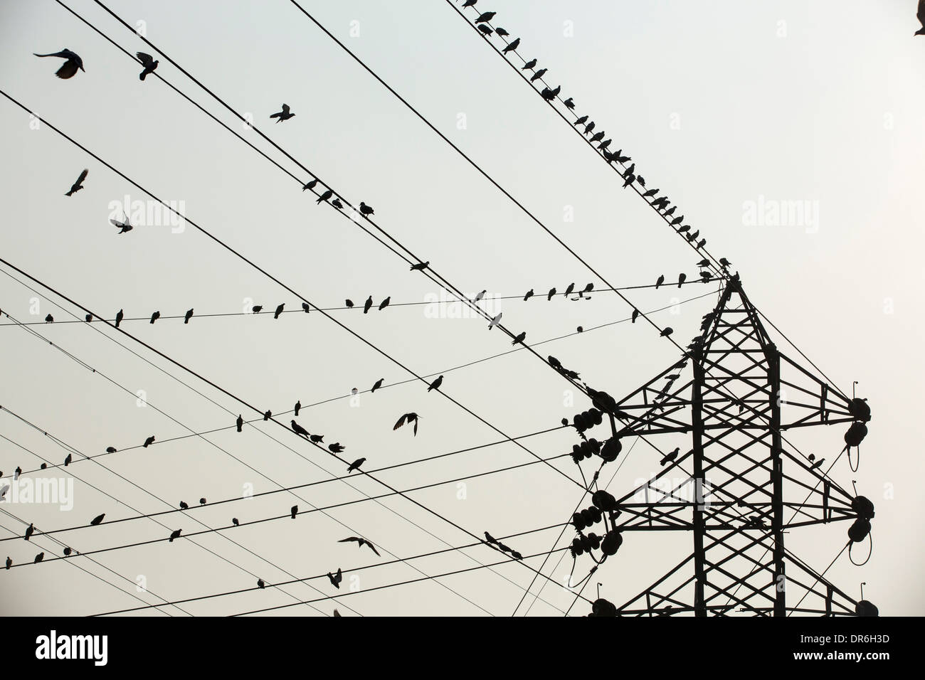 Electric Wire India Stock Photos & Electric Wire India Stock Images ...