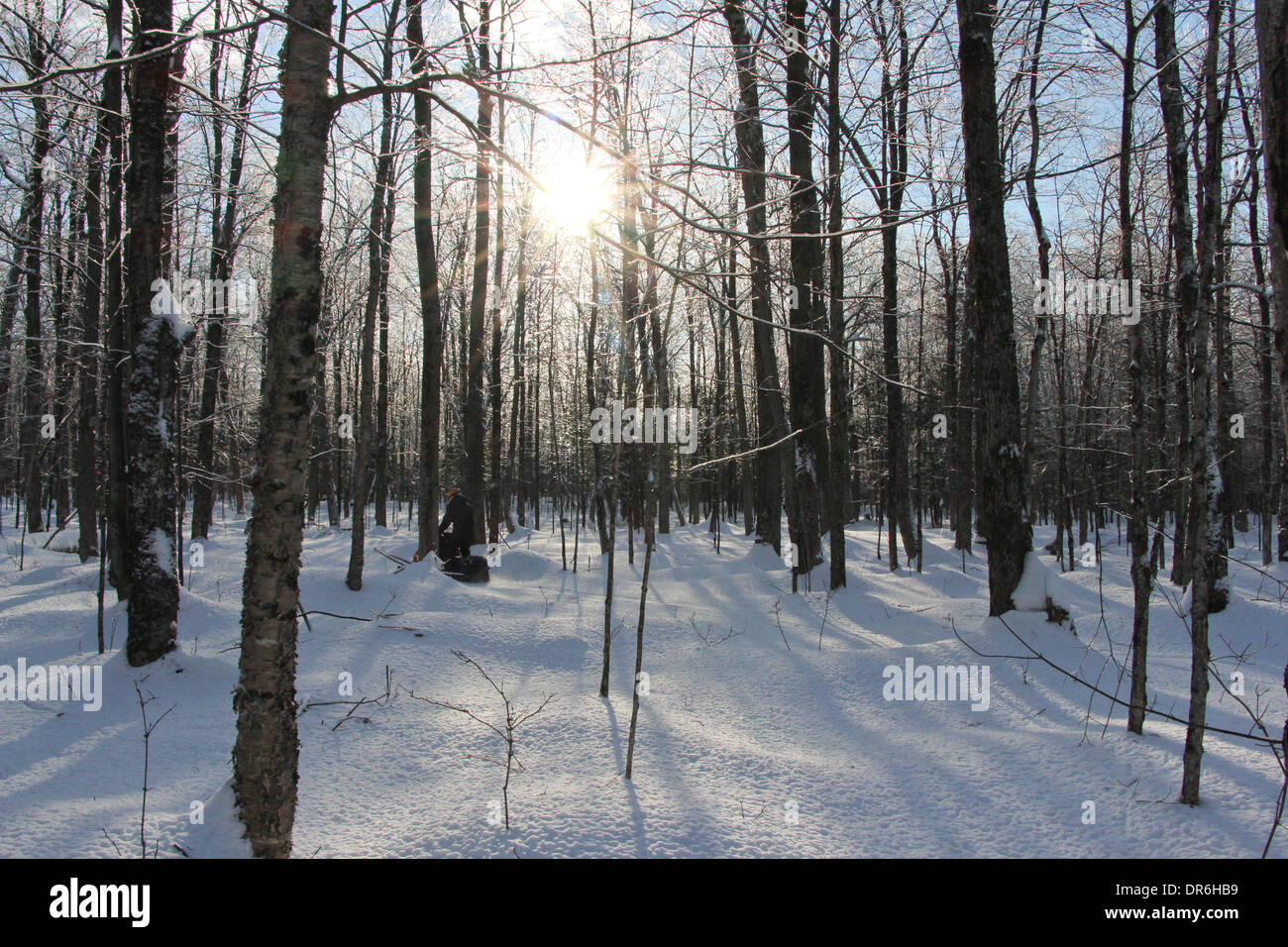 A snowmobile traveling through a wooded area in Quebec, Canada. - Stock Image