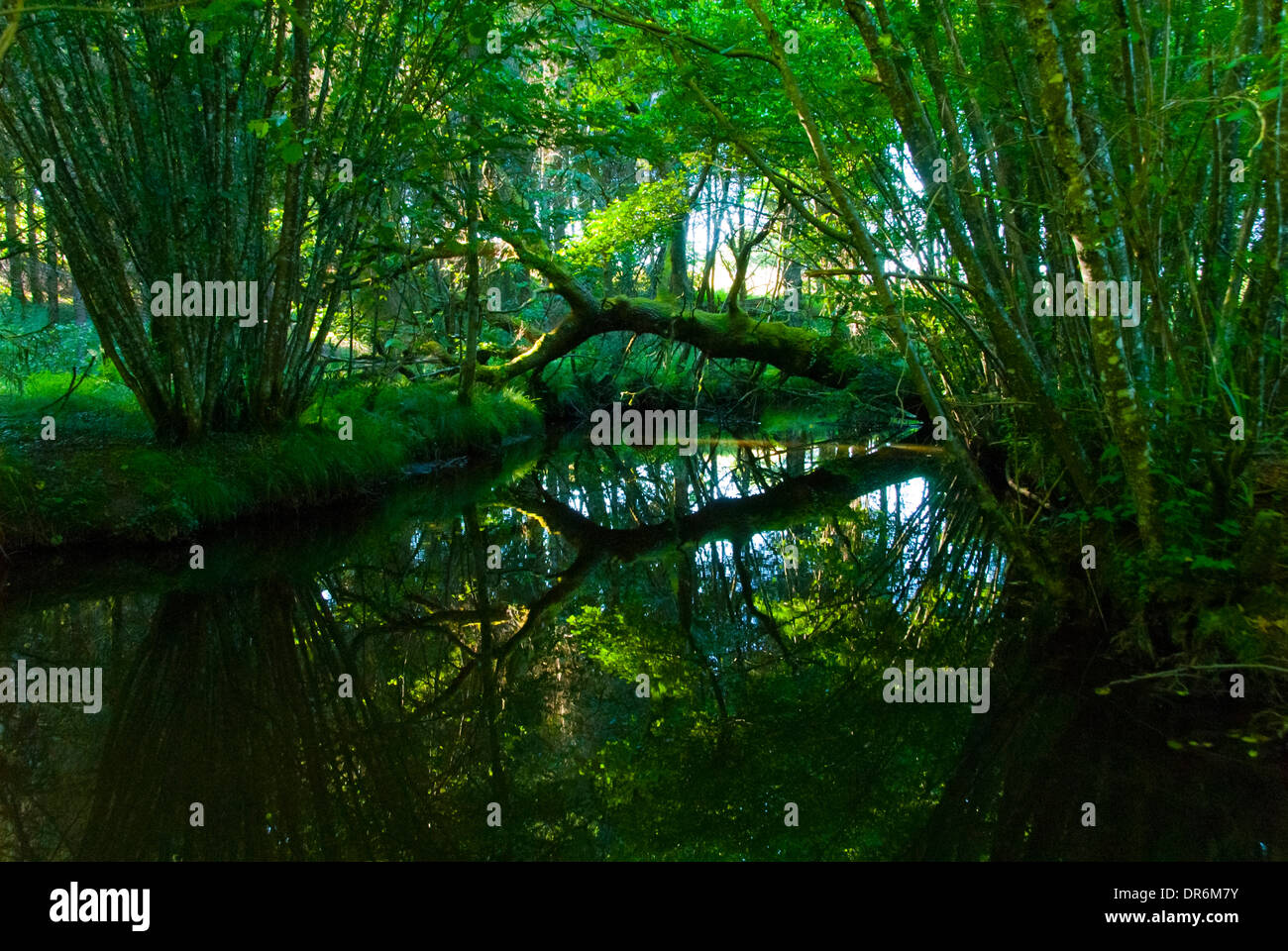 Fallen tree reflected on surface of water Stock Photo