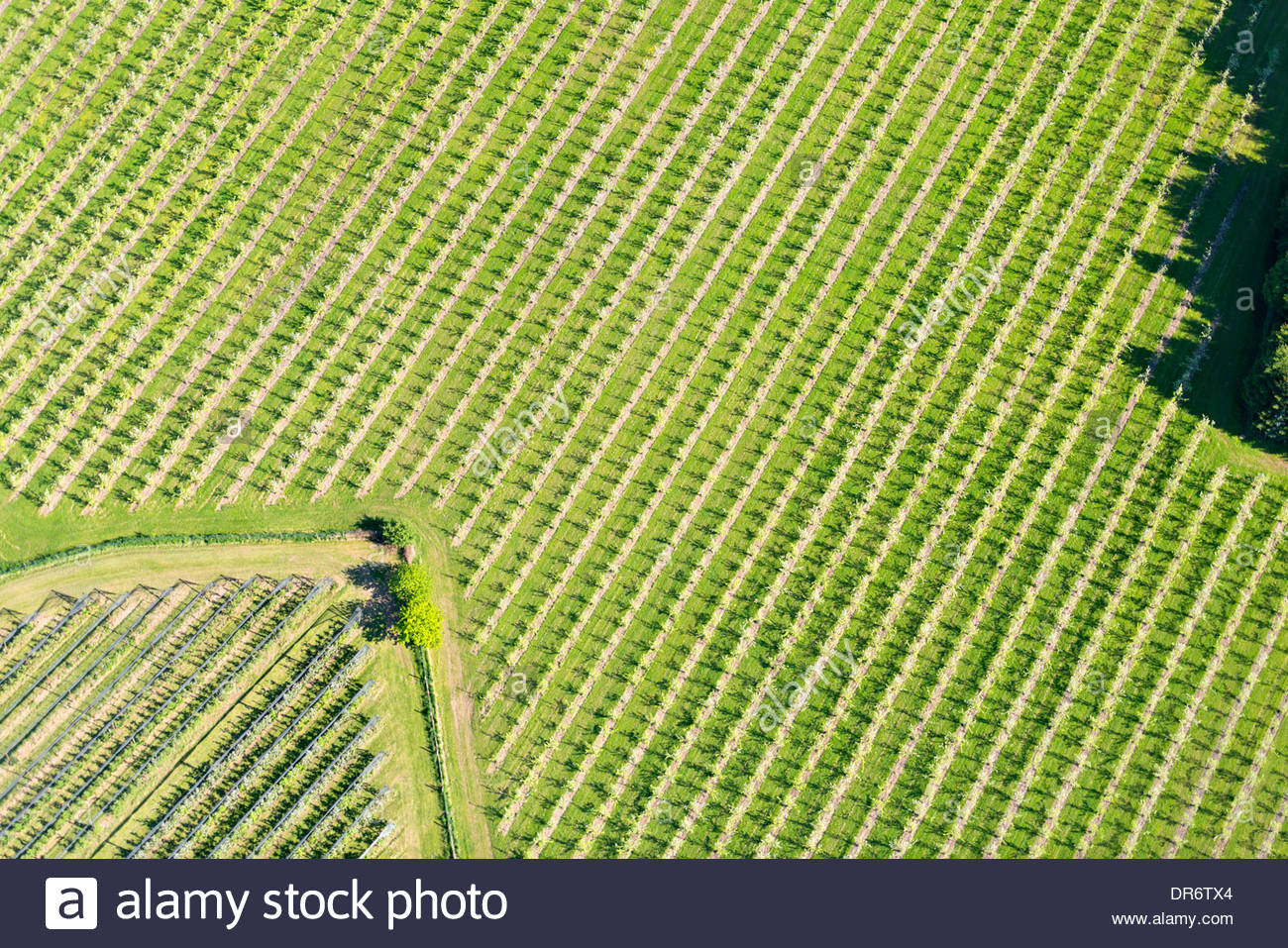 Germany, Baden-Wurttemberg, Friedrichshafen, Aerial view of fruit plantation - Stock Image