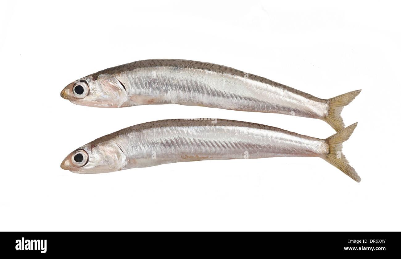 fresh smelts fish isolated on white background - Stock Image